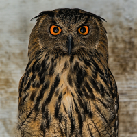The Night Owl! Events and Opportunities  in the Digital Realm Update!!!